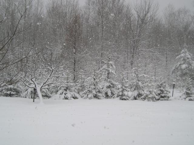 More Snow 3 9 11